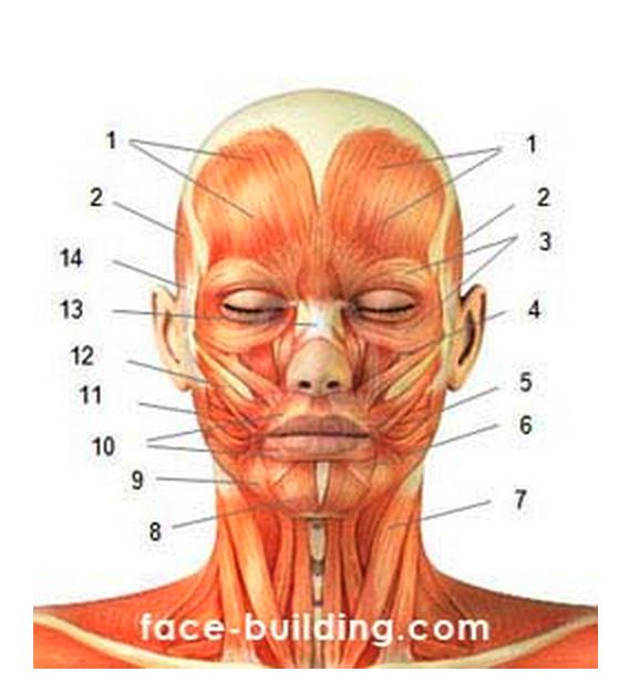 Неврастения и мышцы шеи